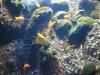 AquaDom & Sea Life em Berlim