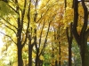 Outono em Berlim