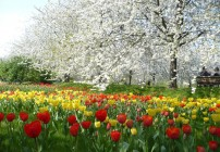 O parque na época das tulipas