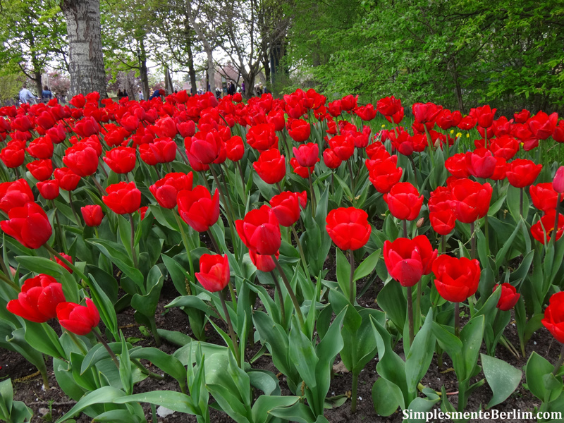 Tulipan festival da tulipa - Tulipas para ventiladores de techo ...