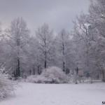 Neve no parque Tiergarten