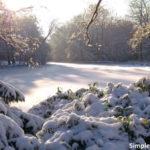 DicasDoQueFazerEmBerlimNoInverno_Tiergarten
